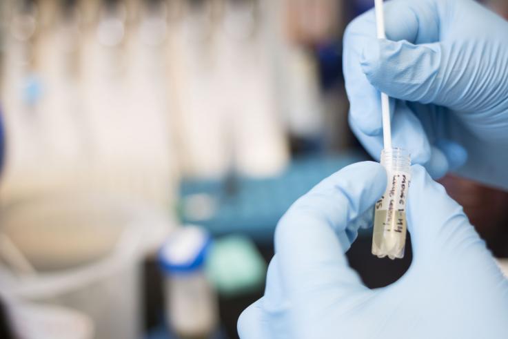 Photo of lab testing