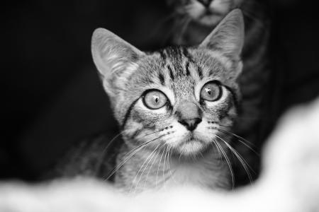 Photo of a house cat