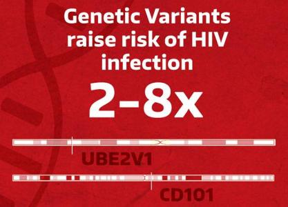 Genetic variants raise risk of HIV infection by two- to eight-fold