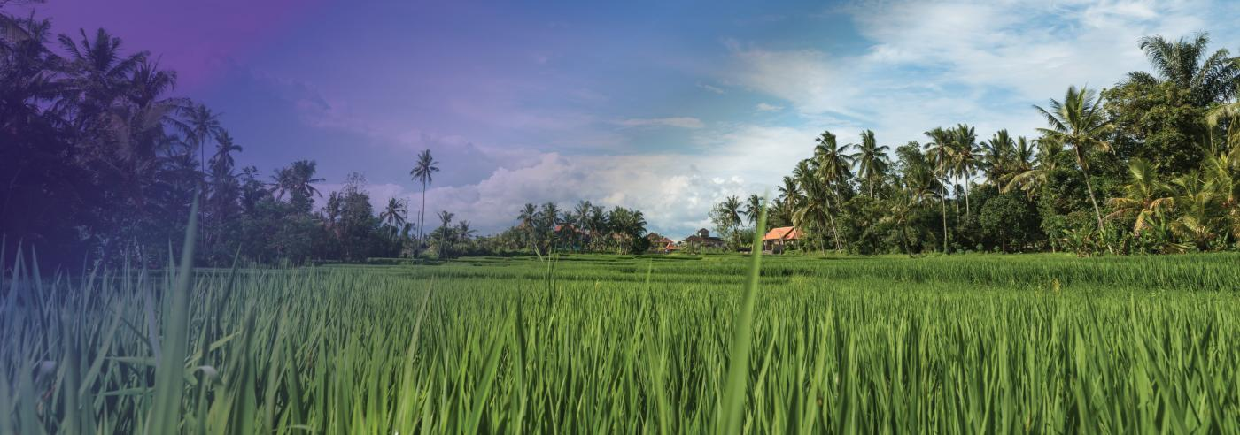 Photo of rice fields in Ubud