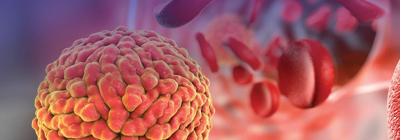 Illustration of Zika virus in the blood stream
