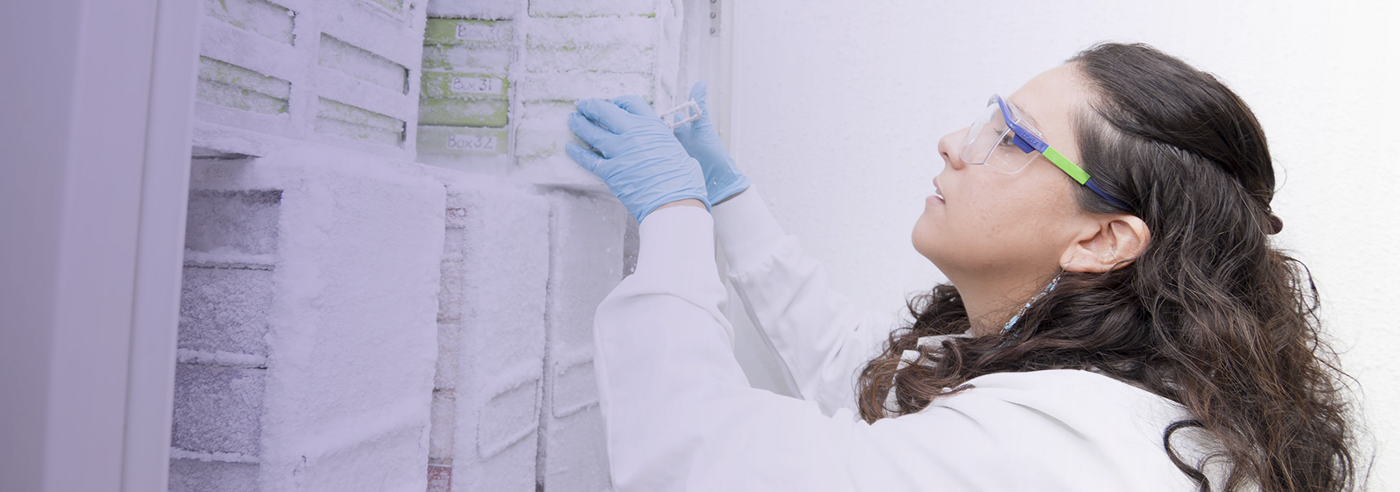 Photo of Pathobiology student putting vaccines in a freezer