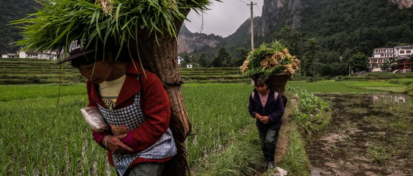 Photo of rice farmers in southeastern China