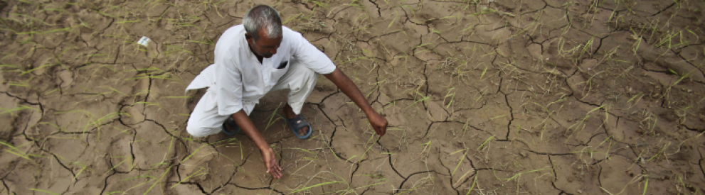 Photo of a farmer assessing dry land